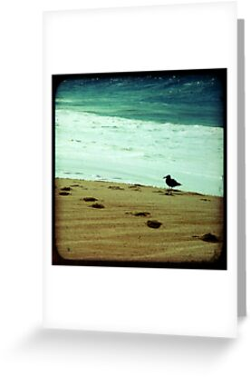 Calm beach photography 8x8 print, Los Cabos Mexico travel photography, green ocean waves seabird deep in thought dreamy TTV by moderatefanatic