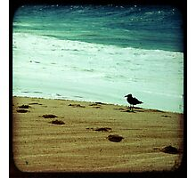 Calm beach photography 8x8 print, Los Cabos Mexico travel photography, green ocean waves seabird deep in thought dreamy TTV Photographic Print