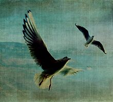 Wings over the World by Sarah Vernon