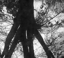 Tree Falling... by Nick Davis