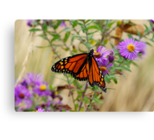 Monarch and Asters 2 Canvas Print