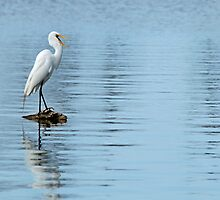 Egret at Spanish Lake by Bonnie T.  Barry