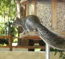 Bushy tailed Squirrel by SprinkleLights