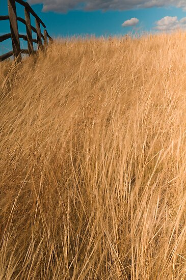 Prarie Grass by Albert Dickson