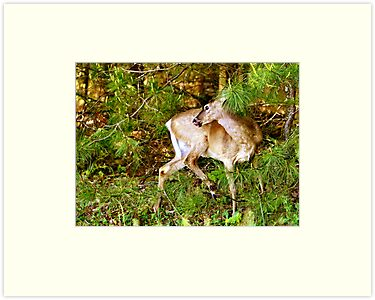 Pretty Little Doe by Lisa G. Putman
