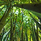 Bamboo Forest by Mark Lee