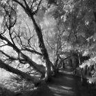 Dark paths by Matthew Larsen