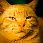 Relaxed Cat by georgiaart1974