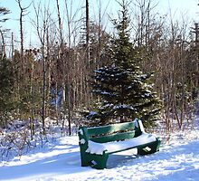 Bench In Winter by HALIFAXPHOTO