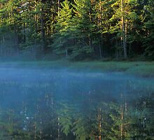 Reflected Forest by Bill Spengler