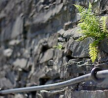Wall fern by Lars Clausen