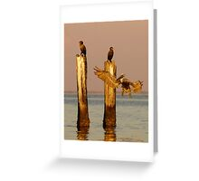 Pelican and Cormorant on the old Ice House Piers 1 Greeting Card