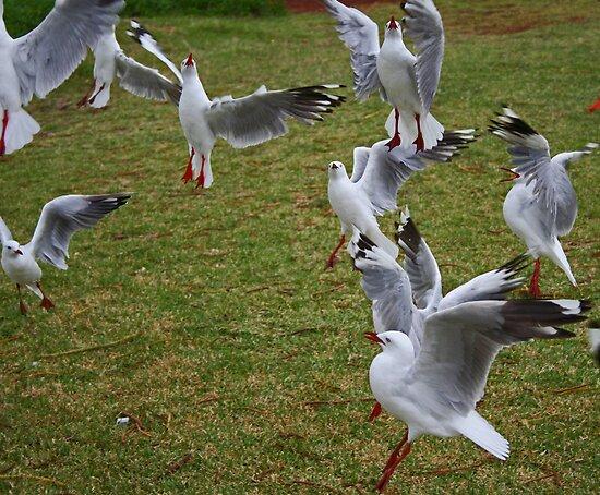 Seagulls # 2 by Evita