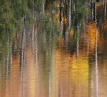 Forest in the Water by Julia Washburn