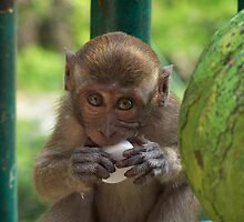 Baby Monkey by Joeltee