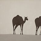 Three Camels by energymagic
