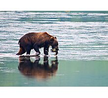 Kodiak Bear Sow with a Pink Salmon. Photographic Print