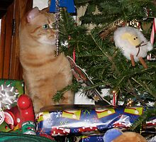 Where's My Present.?...oooh I Think I See It! by Rebecca Bryson