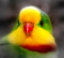 Who's a pretty boy then ? by Clive