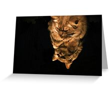 Mirror Cat In Light Greeting Card