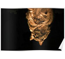 Mirror Cat In Light Poster