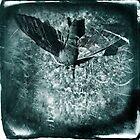 Hawk Moth by David Atkinson