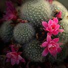 Desert Life by Shadowdreamer