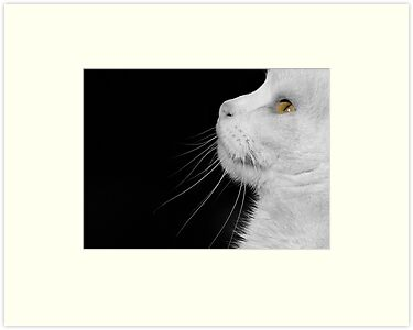 Casper In Profile by Sally Green
