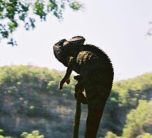Giant chameleon by Ollie de Brett