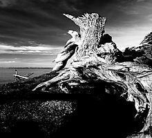 dead wood by jason owens