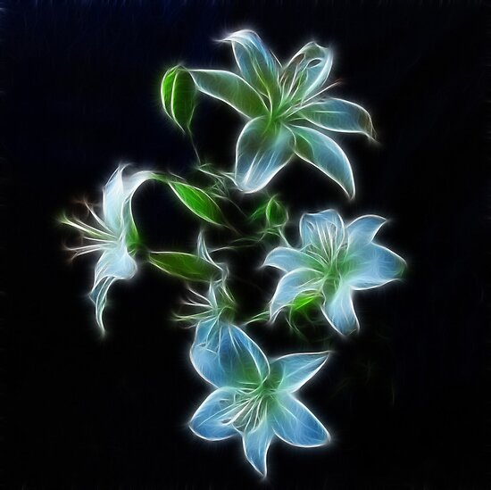 Lilies on Black by Sandy Keeton
