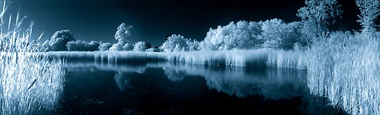 Wetland Pond in IR by Max Buchheit