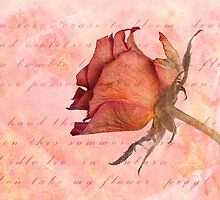 When roses cease to bloom... by John Edwards