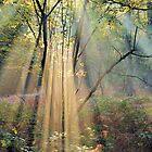 Beams of light by jimmy hoffman