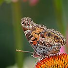 *Butterfly Macro* by Darlene Lankford Honeycutt