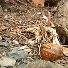 Broken Snail Shell by samiam