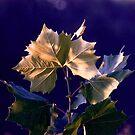 Simple leaf by IraW