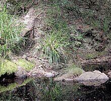 Creek Pool by Steve  Woodman