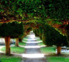 """Yew Tree Promenade"" by Bradley Shawn  Rabon"