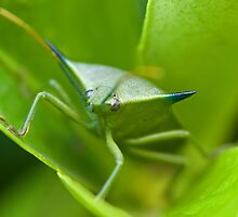 Stink Bug by Jack Reynolds