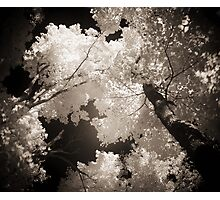 Autumn in Infrared Series , No. 1 Photographic Print