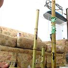 Tall Bamboo Pipes by jamullah