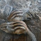 chipmunk couple by lizh467