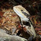 Posing Eastern Water Dragon by Samantha  Goode