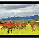 Wine Country by reneegw