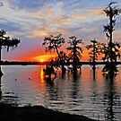 Cypress Silhouettes in St. Martin Parish by Bonnie T.  Barry
