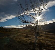 Sunstar Tree by Jeanne Frasse
