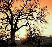 SUNSET, FOOTHILLS SIERRA NAVADA, CA. by Chuck Wickham