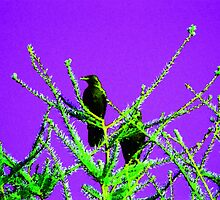 Two Crows by Leanne  Thomas