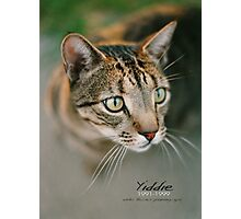 Yiddie Remembered © Vicki Ferrari Photography Photographic Print
